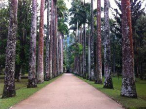 Ρίο ντε Τζανέιρο - Φωτογραφία Βοτανικός Κήπος