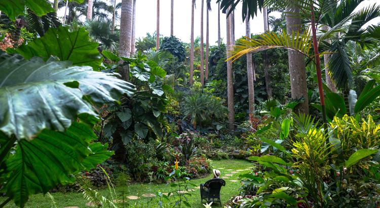 Τροπική βλάστηση στο Μπαρμπάντος