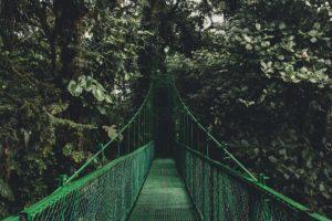 Κεντρική Αμερική - Φωτογραφία Monteverde Cloud Forest Reserve