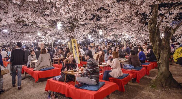 Φεστιβάλ Cherry Blossom στην Ιαπωνία