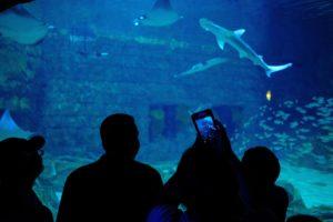 πάρκα αναψυχής-SeaWorld