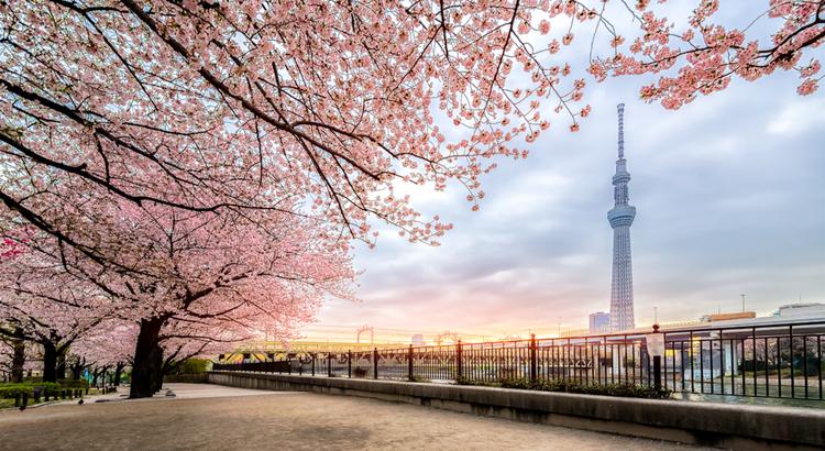 Ταξίδεψε οικονομικά στο Τόκιο και δες τα όμορφα πάρκα