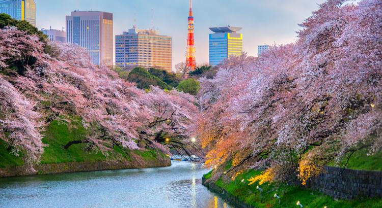 Οικονομικό ταξίδι στο Τόκιο την εποχή Hanami