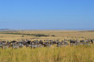 Αφρική: 5 κορυφαίοι προορισμοί - Φωτογραφία Maasai Mara National Reserve
