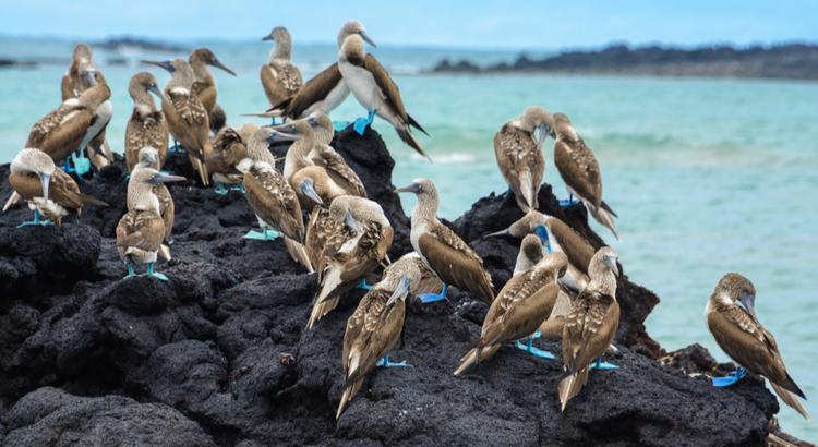 Ένας από τους καλύτερους προορισμούς στην Ν. Αμερική , τα νησιά Γκαλαπάγκος