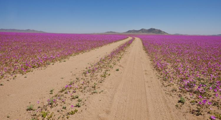 Ανερχόμενος προορισμός στη Νότια Αμερική η έρημος ατακαμα στη Χιλή
