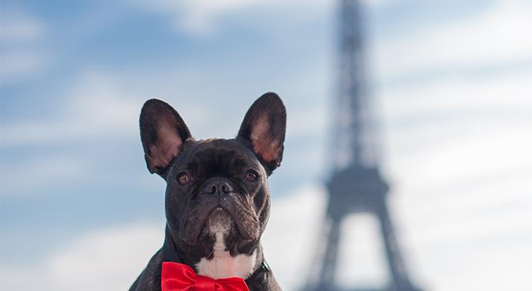 Γαλλία, ένας από τους καλύτερους προορισμούς για διακοπές με κατοικίδια