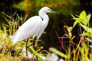 Μαϊάμι οικονομικά-Φωτογραφία Everglades National Park