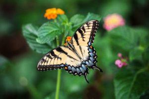 5+1 μέρη στη Ρόδο-Φωτογραφία Κοιλάδα των Πεταλούδων