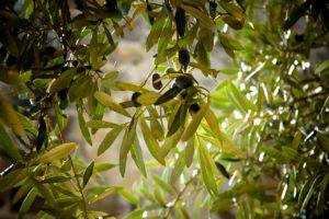 Χανιά κορυφαία μέρη_Φωτογραφία Βοτανικό Πάρκο και Κήποι Κρήτης